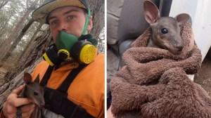 Australian Firefighter Saves Baby Kangaroo Joey
