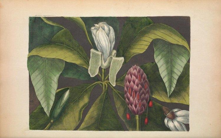 Biodiversity Heritage Library Flora