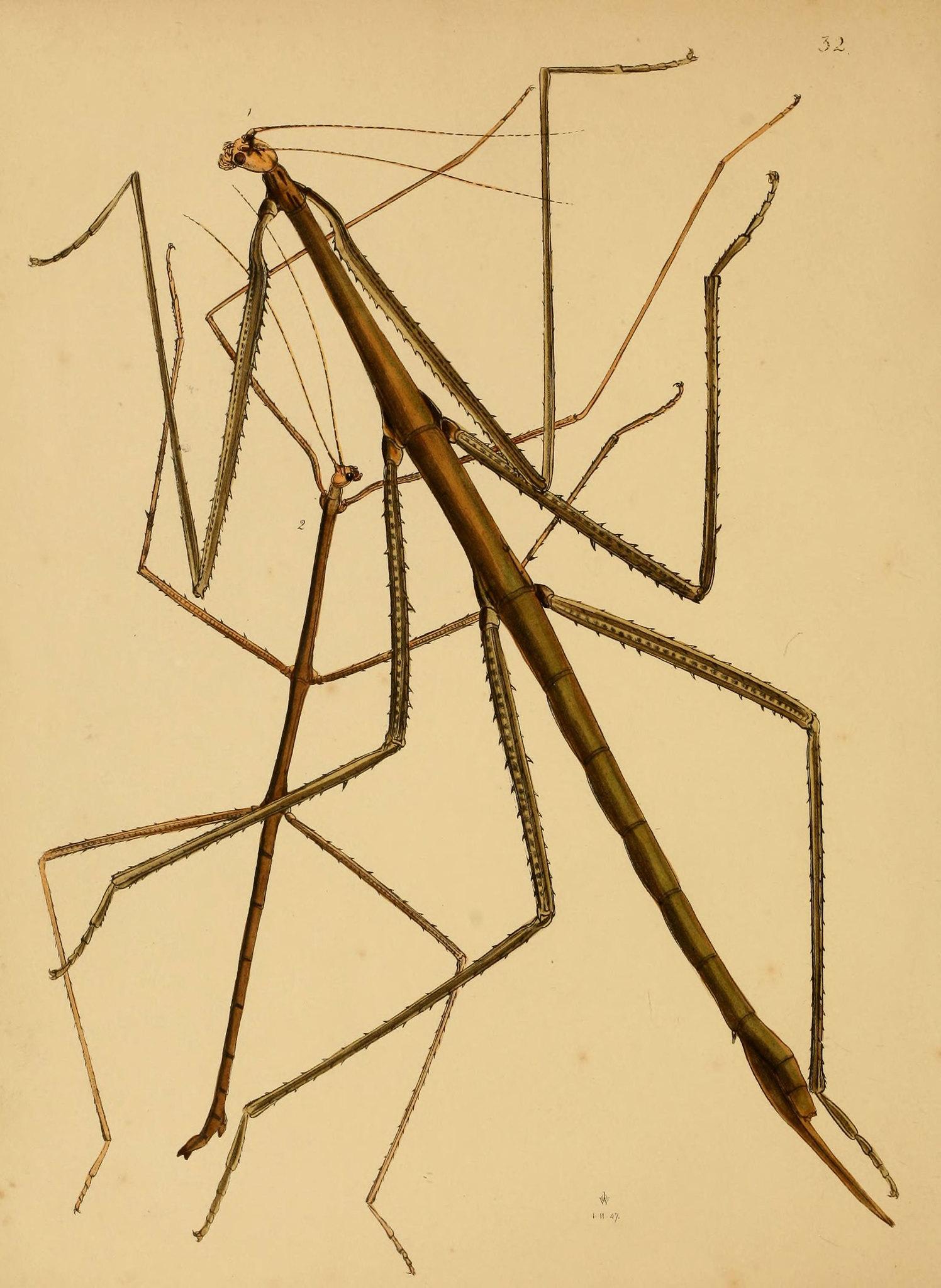 Biodiversity Heritage Walking Stick