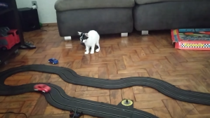 Cat Tries to Catch Slot Car