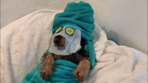 Doxie Face Mask