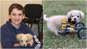 12 Year Old Makes LEGO Wheelchair for Puppy