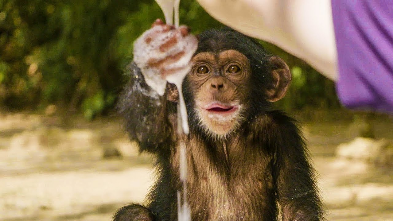 Orphaned Baby Chimpanzees Gleefully Play With Bubbles in a Tub Put Out by Their Adopted Humans