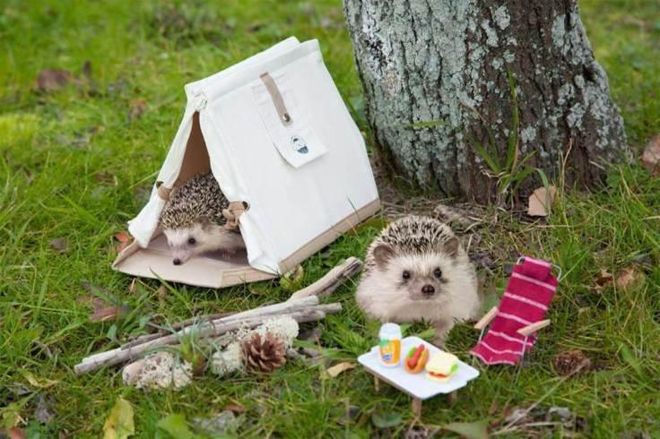Hedgehog Tent Outdoors