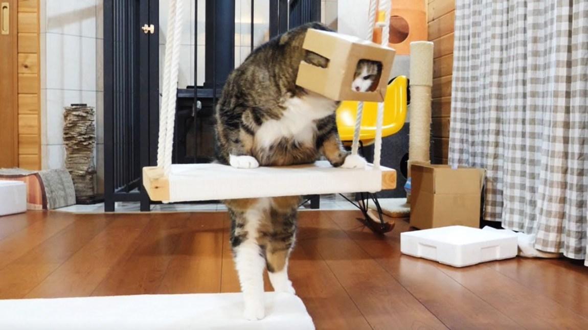 Maru Box on Head Swing