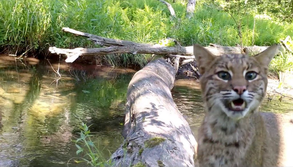 Pennsylvania Photographer Captures Footage of an Amazing Array of Wild Animals Crossing a Log Bridge