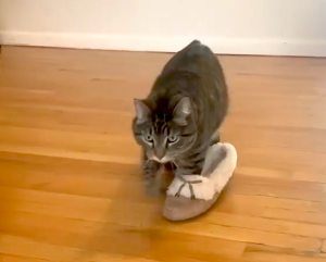 Cat in Slipper