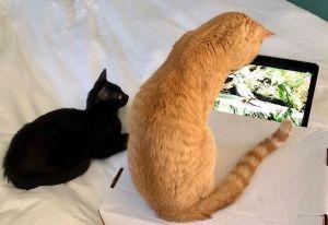 Cats and Quarantine