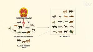Chinese Wildlife Market