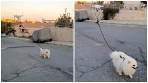 Dog Being Walked by a Drone