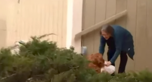 Dog Delivers Groceries to Neighbor