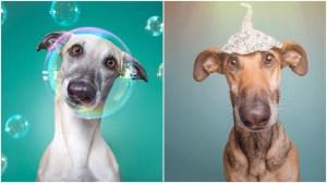 Elke Vogelsang Silly Dog Portraits