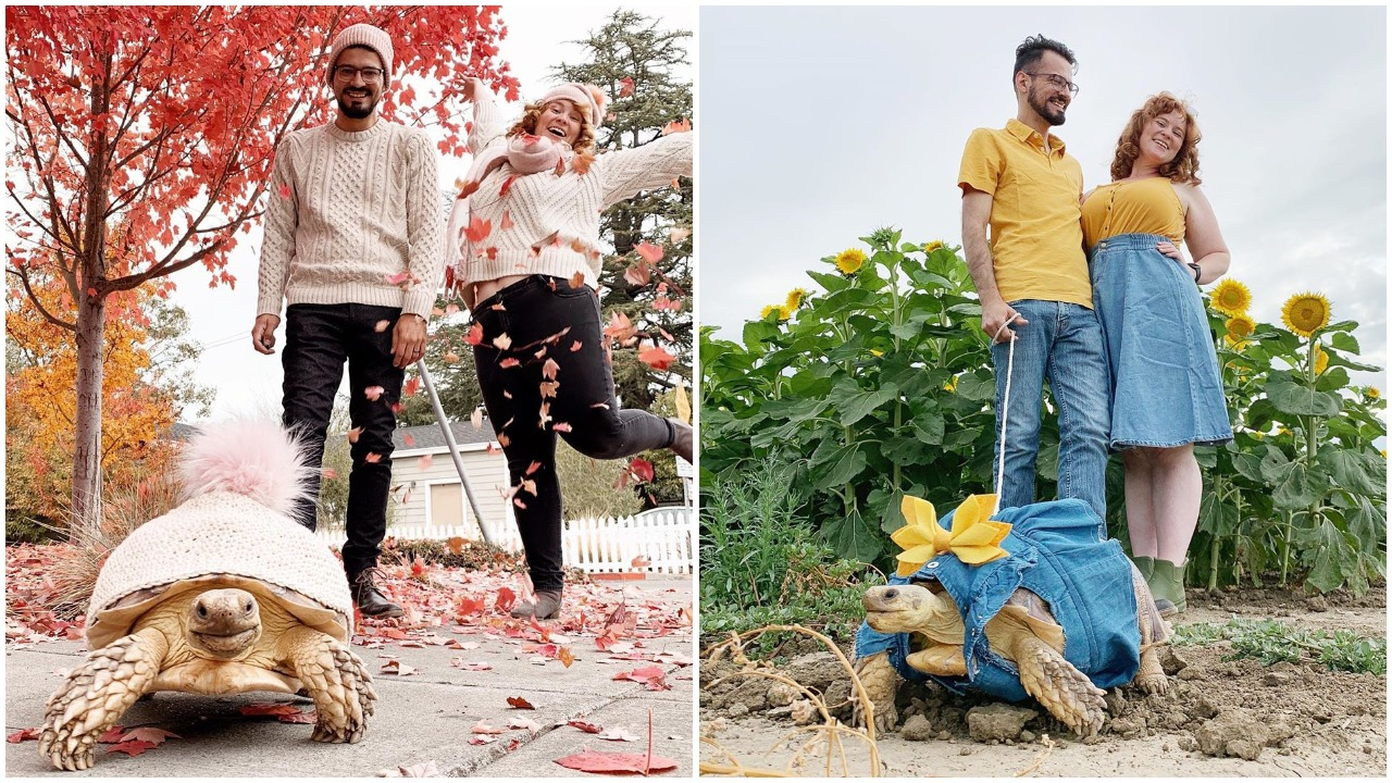 A Pampered Sulcata Tortoise Is Dressed Up in Cute Little Outfits That Match Her Adoring Humans