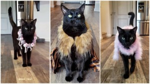 Cat Model on a Catwalk