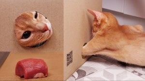 Cat Reaching Through Longer Distances For Treats