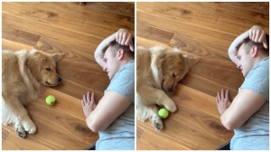 Dog Plays Lethargic Game of Fetch With Human