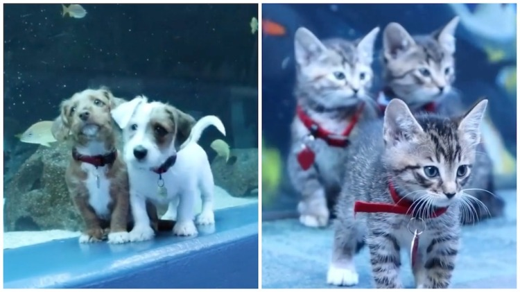 Kittens and Puppies of Atlanta Humane Society Visiti Aquarium