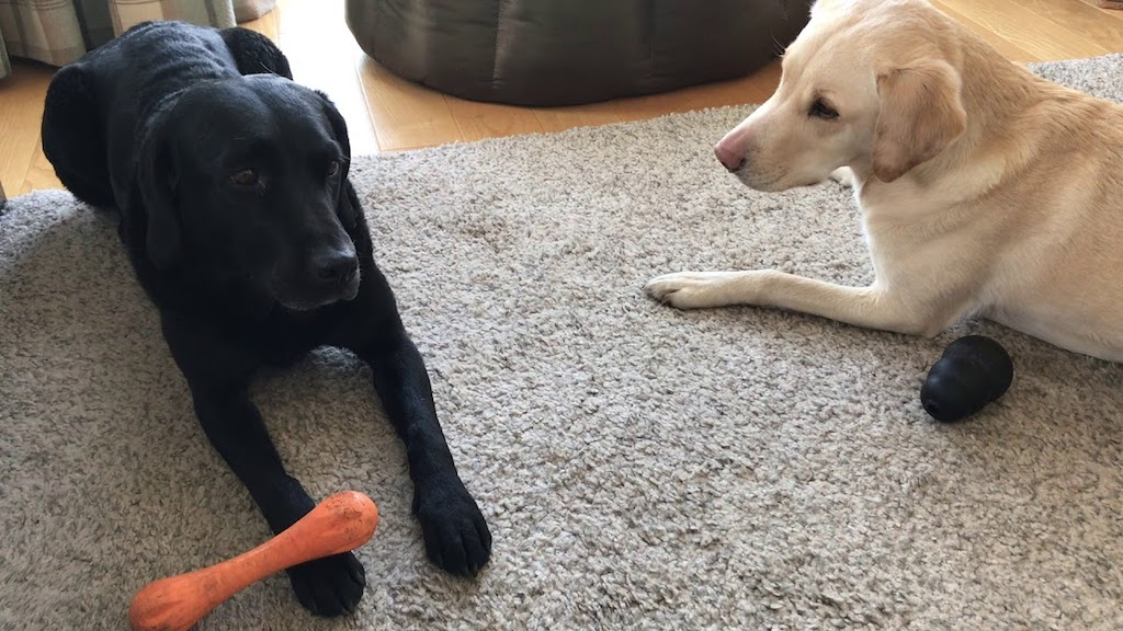 Olive and Mabel Commentary Chew Toy