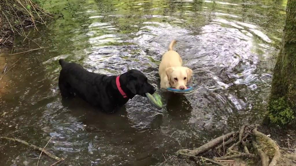Olive and Mabel Walk of Shame