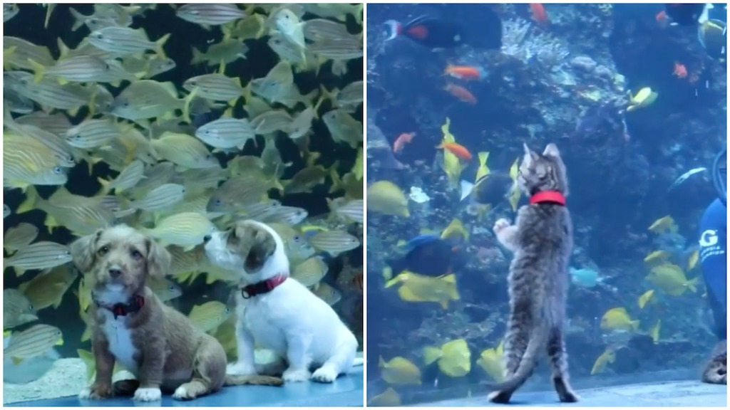 Puppies and Kittens From the Atlanta Humane Society Explore the Georgia Aquarium While It Is Closed - laughing squid