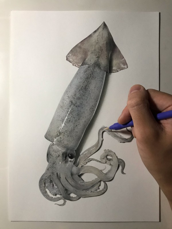 Squid Pencil and Ink Illustration