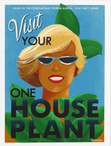 Visit Your House Plant
