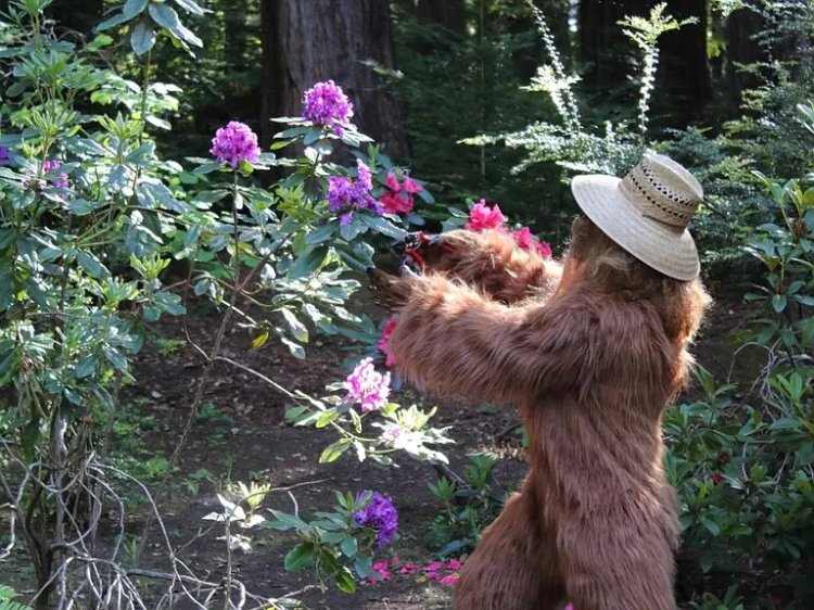 Bigfoot Sells Felton Home Garden
