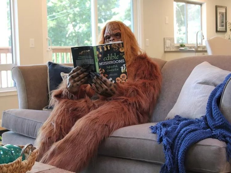 Bigfoot Sells Felton Home Living Room