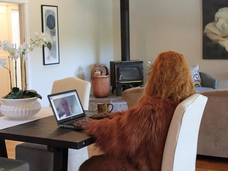 Bigfoot Sells Felton Home Office