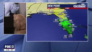 Brody Dog Interrupts Weather Report