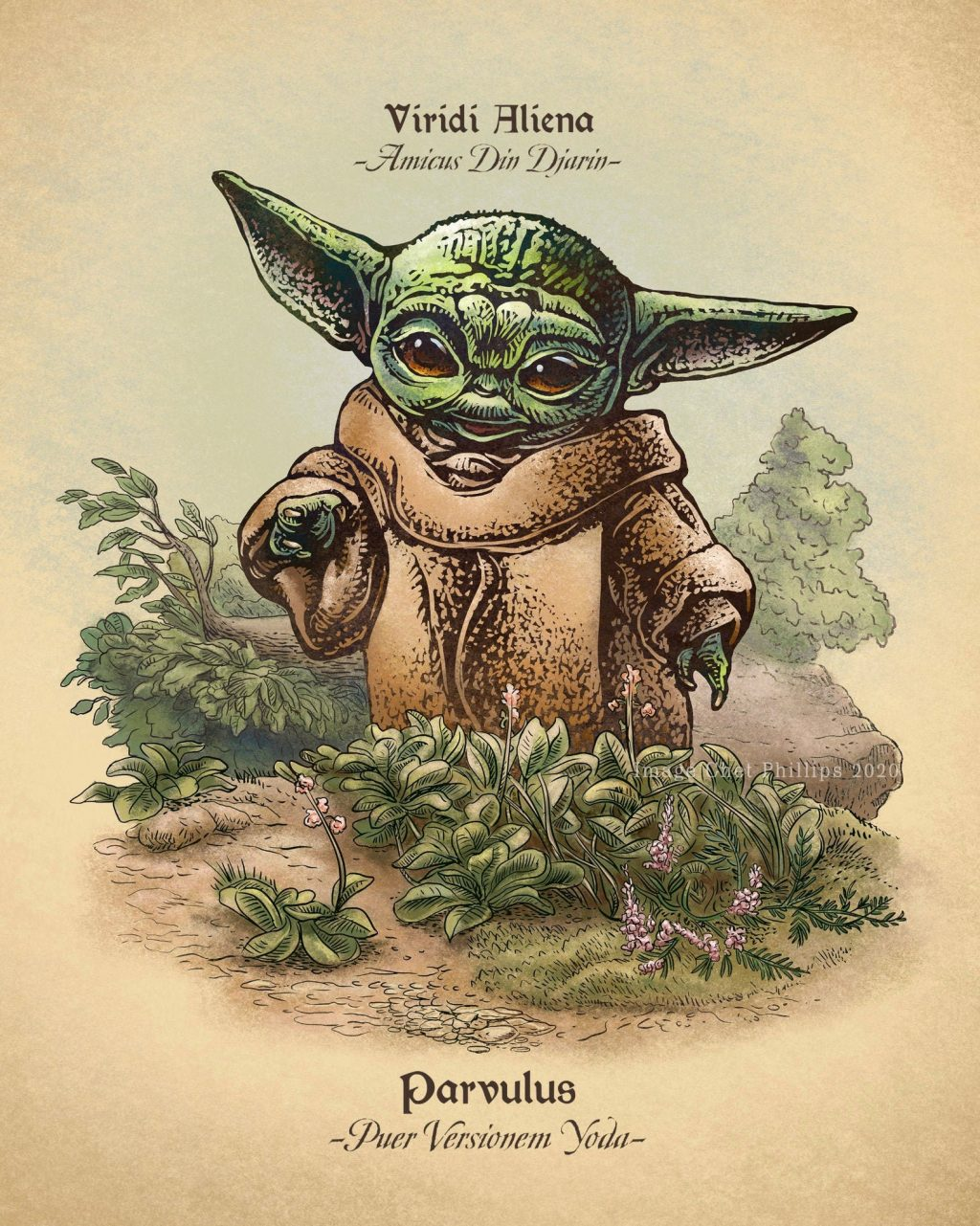 Chet Phillips The Child Baby Yoda