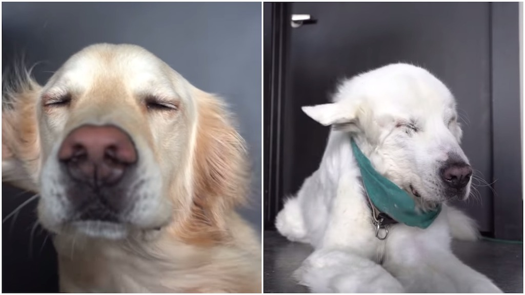 Two Dogs Blissfully Enjoy the Powerful Breeze Generated by Huge Industrial Sized Fans
