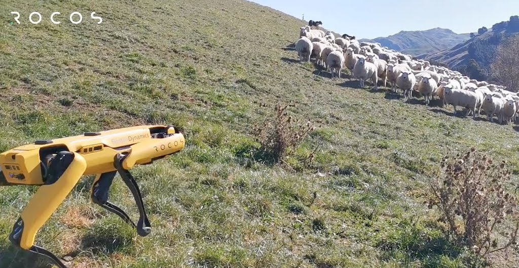 Spot the Four-Legged Robot Goes to Work on the Farm