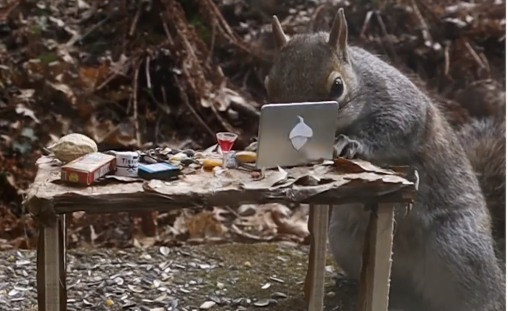Slow Motion Footage of an Industrious Squirrel Working From Home on a Tiny 'Acorn' Computer on a Tiny Desk