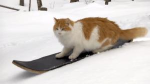 Taddy the Skateboarding Cat