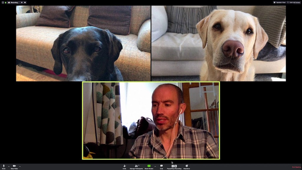 Video Chat With Olive and Mabel Dogs