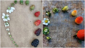 Berry Lifecycles