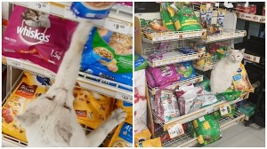 Cat Leads Woman to His Favorite Food in Store