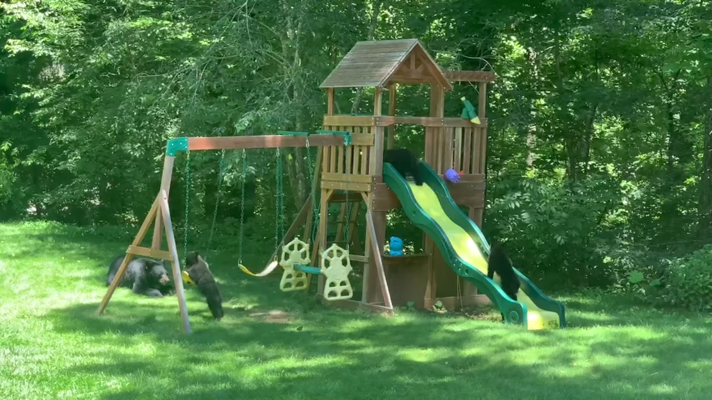 A Family of Bears Gleefully Enjoy Themselves on a Children's Playground Set in a North Carolina Backyard