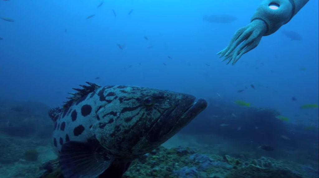 A Robotic Spy Squid Has an Unexpected Encounter With a Couple of Giant Potato Cod Fish