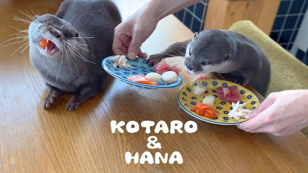 Otters Eat Breakfast