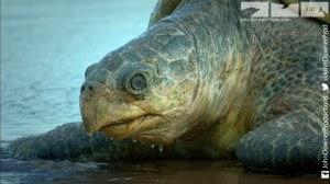 Spy Turtle