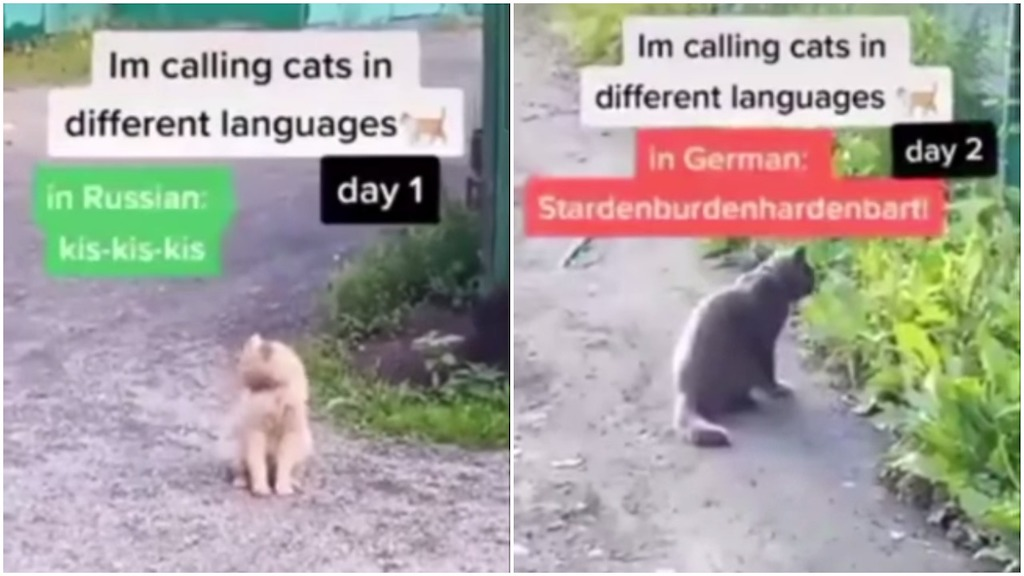 Calling Cats In Different Languages Until They Respond