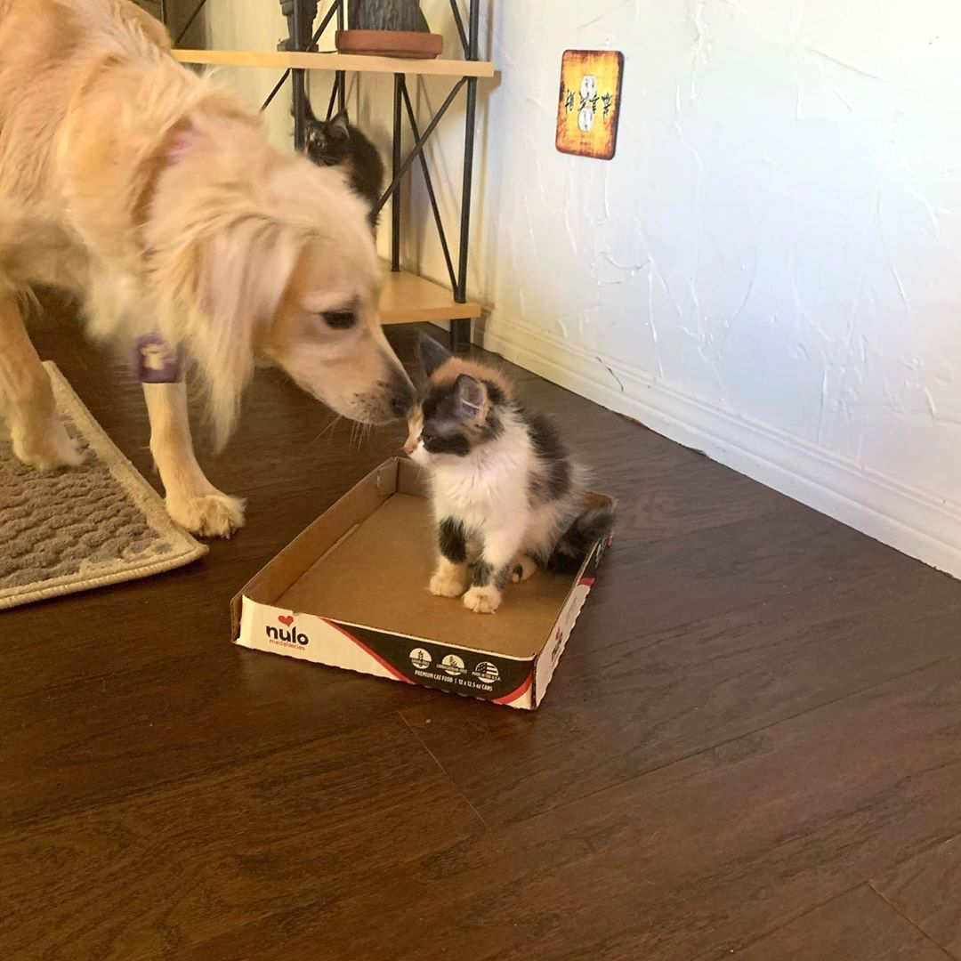 Dog Gently Comforts an Orphaned Litter of Kittens