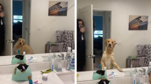 Dog Confused by Mirror Reflection Hide and Seek