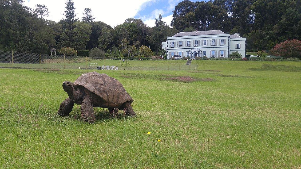 Jonathan the Tortoise at Plantation House