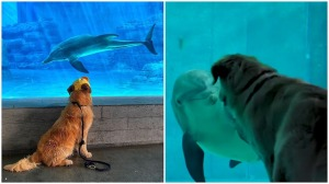 Dog Named Kevin Becomes Friends With Winter Dolphin