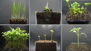 Sprouting Plants Dance to Jazz