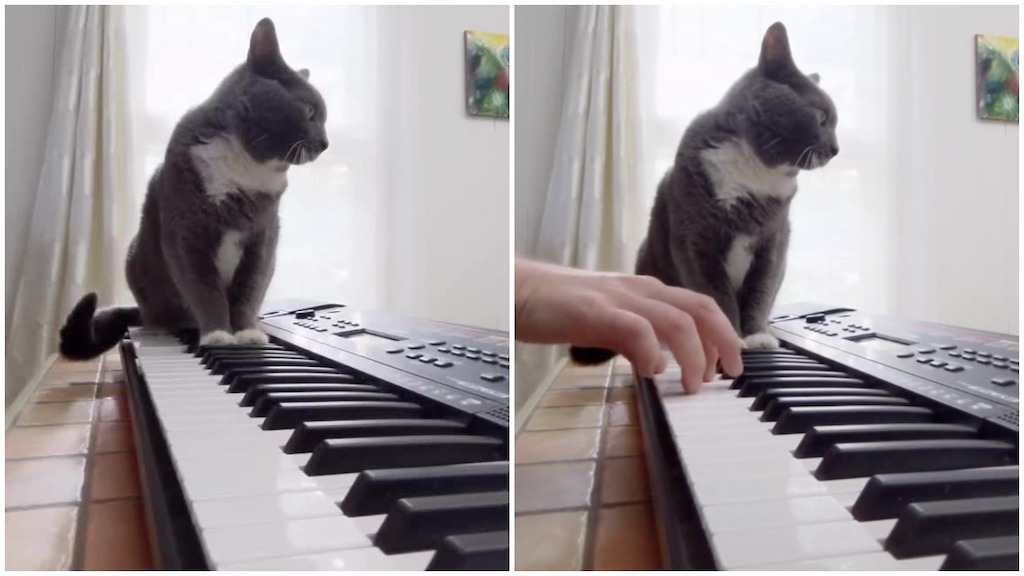 Cat Plays Jump