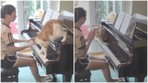 Cat Walks Across Piano Keyboard